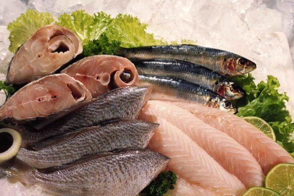 Refrigeração de Pescados – o que você precisa saber! – RR
